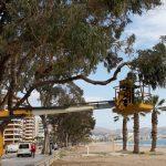 FOBESA mejora las zonas verdes de Benicàssim
